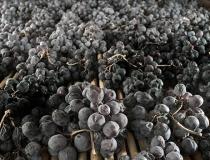 timelapse MASI – l'appassimento dell'uva